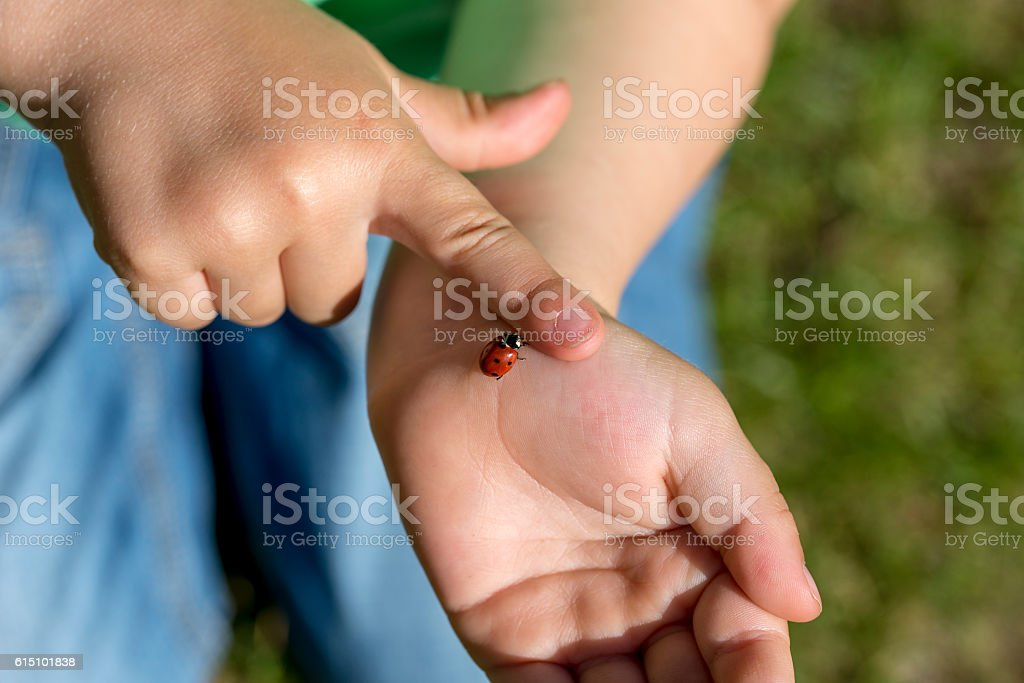 Young child fascinated by a ladybug stock photo