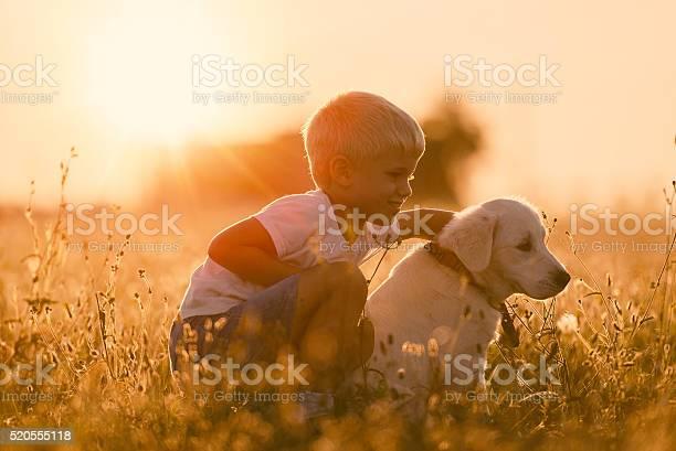 Young child training golden retriever puppy dog looking right picture id520555118?b=1&k=6&m=520555118&s=612x612&h=iqqerrmtqth8praz0mjsohnocbsx86zqnxdiq4xb9gi=