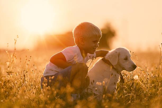 Young child training golden retriever puppy dog looking right picture id520555118?b=1&k=6&m=520555118&s=612x612&w=0&h=rn5ieitrse6rhwo6ewsnirohjec0 qewo7lsbc13tdm=