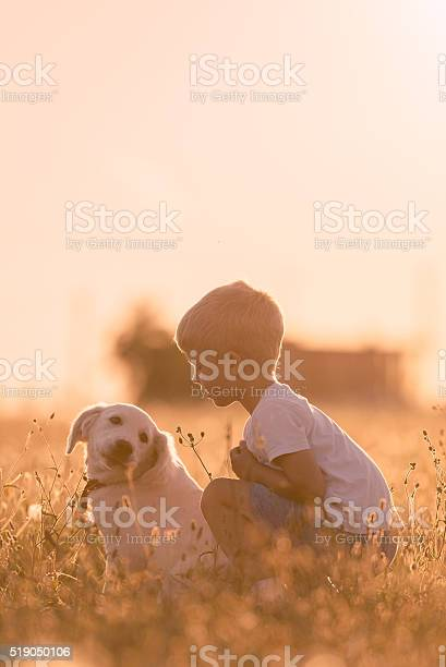 Young child training golden retriever puppy meadow on sunny day picture id519050106?b=1&k=6&m=519050106&s=612x612&h=appcxgaikkun7wij3i94pnboaoasokbicebw2rof d4=