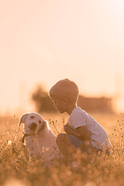 Young Child Training Golden Retriever Puppy Meadow on Sunny Day stock photo