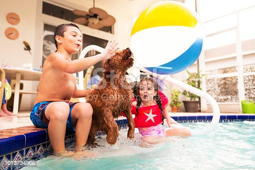 young children and pet dog playing in the pool. hitting a beach ball and playing keep away with their pet dog.