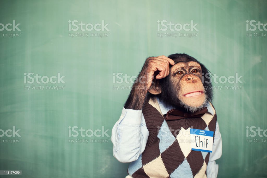 Young Chimpanzee Nerd Student Scratches Head stock photo