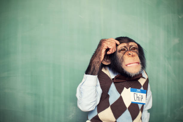 young chimpanzee nerd student scratches head - ape stock pictures, royalty-free photos & images