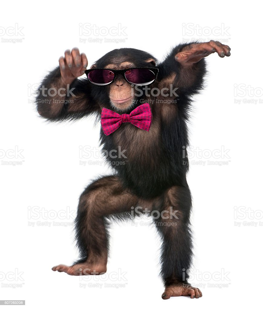 Young Chimpanzee wearing glasses and a bow tie stock photo