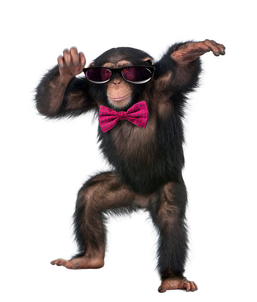 young chimpanzee wearing glasses and a bow tie - ape stock pictures, royalty-free photos & images