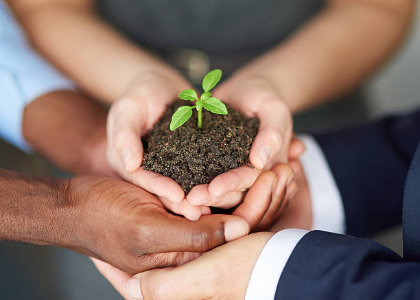 young companies need nurturing - dedication stock photos and pictures