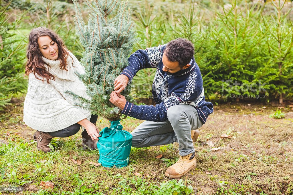 Young Couple Choosing the Right Fir Tree for Christmas stock photo