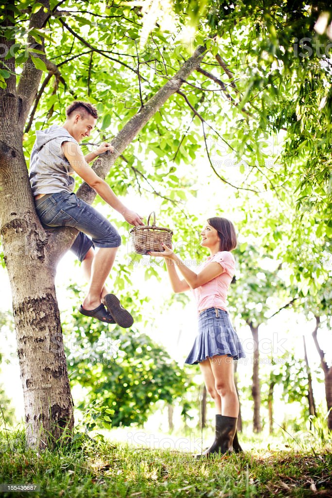 Young couple collectiing fruits royalty-free stock photo
