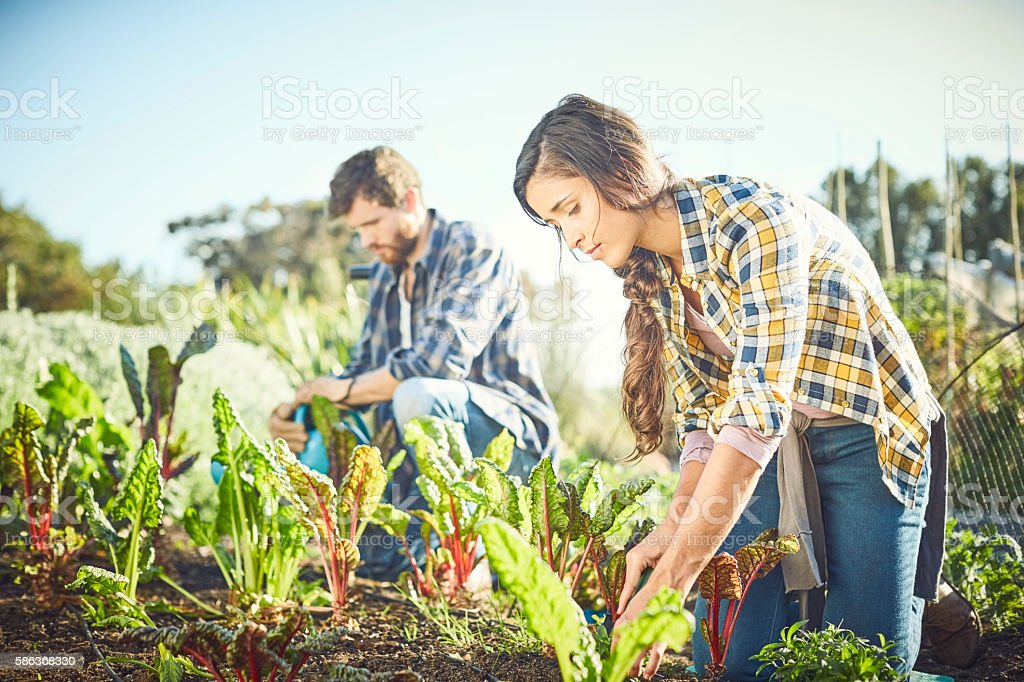 Young couple gardening in organic field on sunny day - foto de acervo