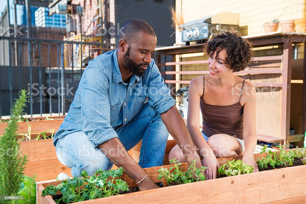 Young couple gardening together stock photo