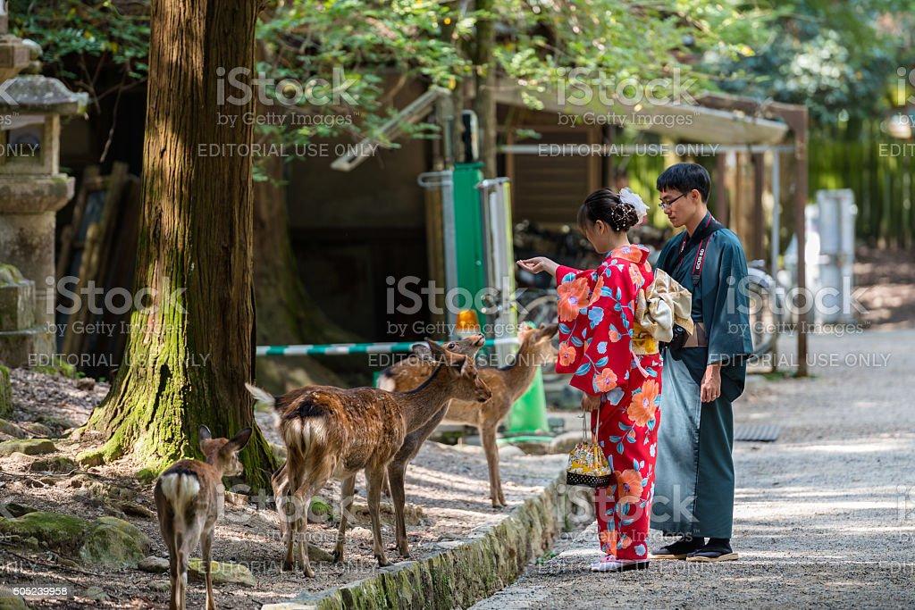 Young couple in kimonos feeding the deer in Nara stock photo