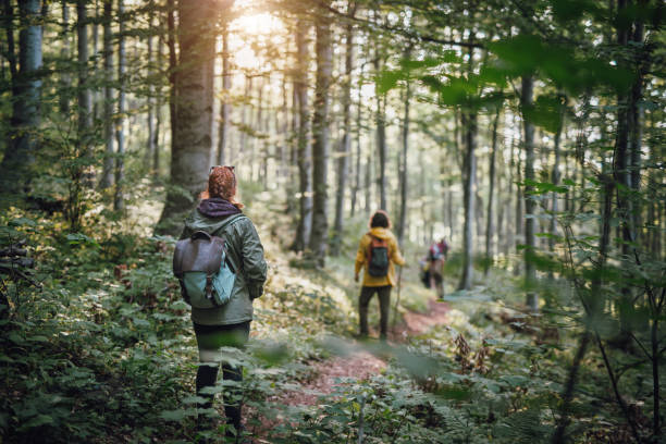 Young couple on hiking in the forest stock photo