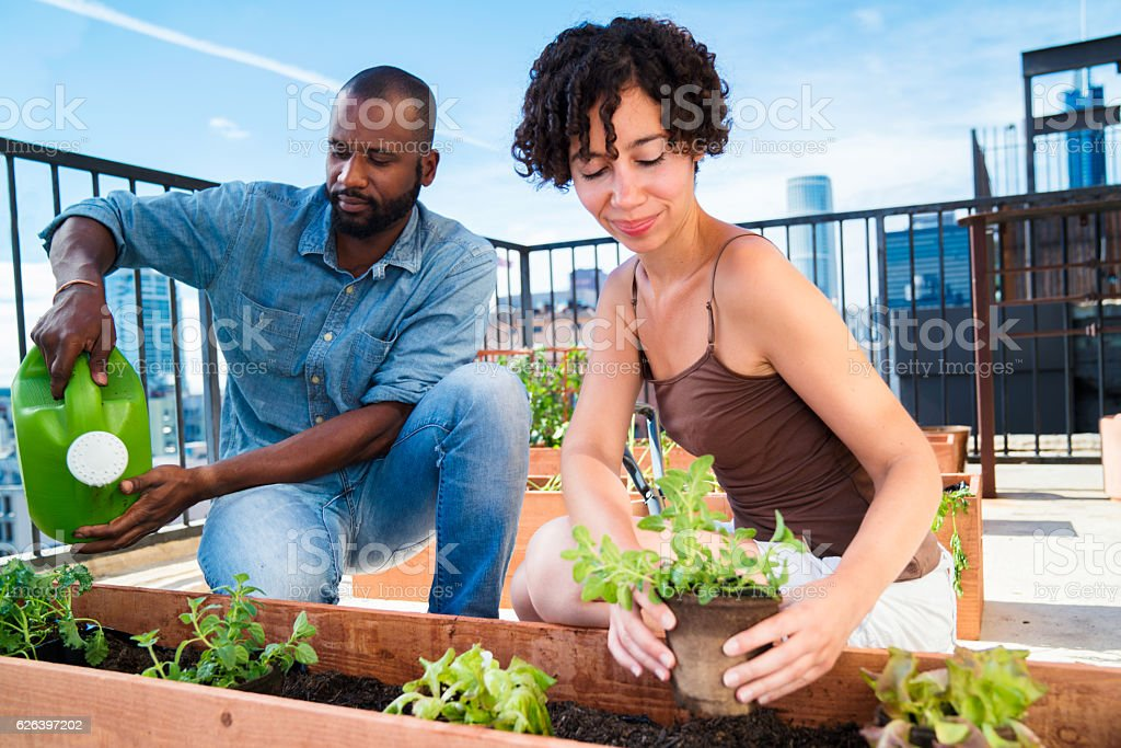 Young couple planting flowers together stock photo