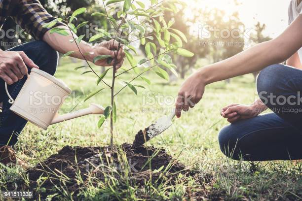 Young couple planting the tree while watering a tree working in the picture id941511336?b=1&k=6&m=941511336&s=612x612&h=skb6g7q4wgplfjahks2zznncsm1qdrzxaf2epwag0uu=