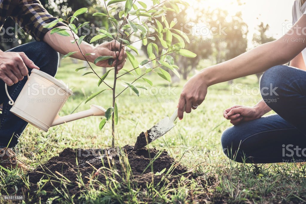Young couple planting the tree while Watering a tree working in the garden as save world concept, nature, environment and ecology - foto stock
