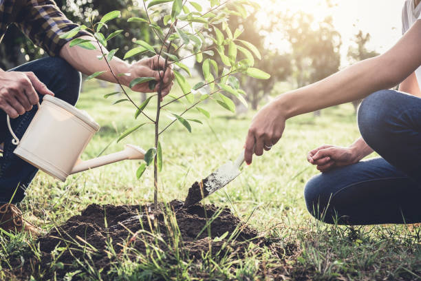 Young couple planting the tree while Watering a tree working in the garden as save world concept, nature, environment and ecology stock photo