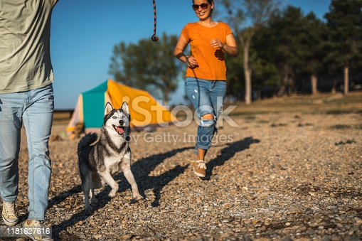 Young couple playing with dog on camping