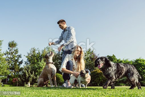 Low angle view of Caucasian couple wearing casual clothing and enjoying the company of their Boxer, Pug, and Rhodesian Ridgeback in front yard.