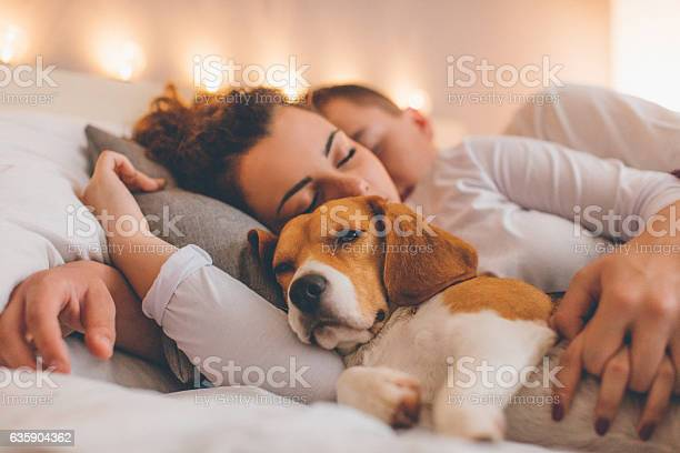 Young couple relaxing on the bed with her pet dog picture id635904362?b=1&k=6&m=635904362&s=612x612&h=snt9wcmegez4loxnyrxa m7i24uucfkoazxmljr 2p4=
