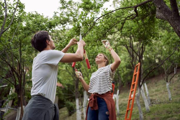 Young couple shortening tree branches in their orchard stock photo