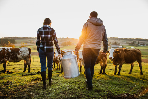 Young female and male farmer carrying milk canister at dairy farm