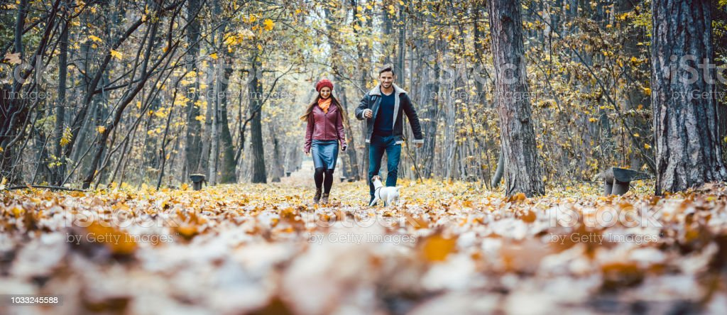 Young couple walking with their dog in a colorful autumn forest stock photo