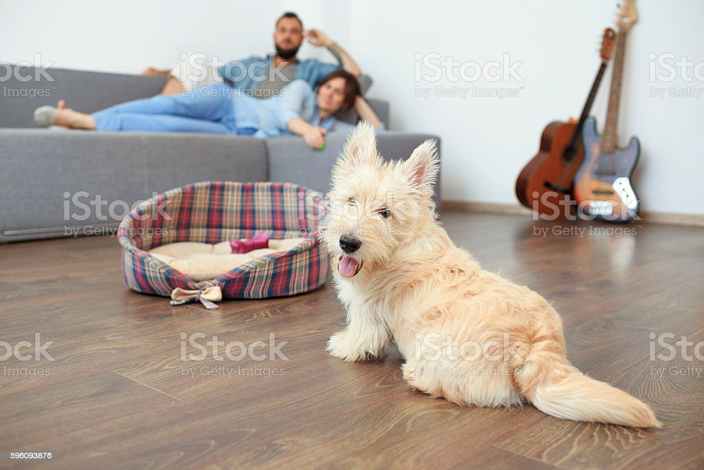 Young couple with a dog at home. Lizenzfreies stock-foto