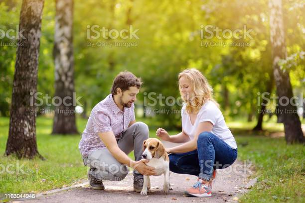 Young couple with beagle dog in a sunny summer park picture id1163044946?b=1&k=6&m=1163044946&s=612x612&h=ykiqw2muyi0 qb4ogh8rmruobi sbisibh6 stngqmu=