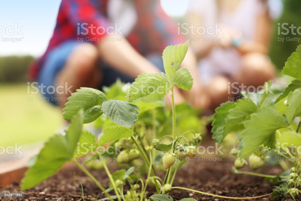 Young couple working in the garden stock photo