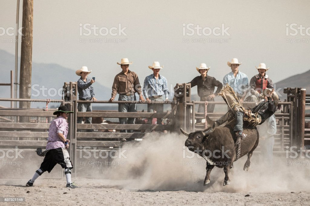 A young cowboy in action while bareback riding on a bucking bull while a group of cowboys watch him in the background. stock photo