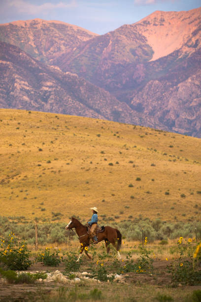 A Young Cowgirl Riding Her Horse stock photo