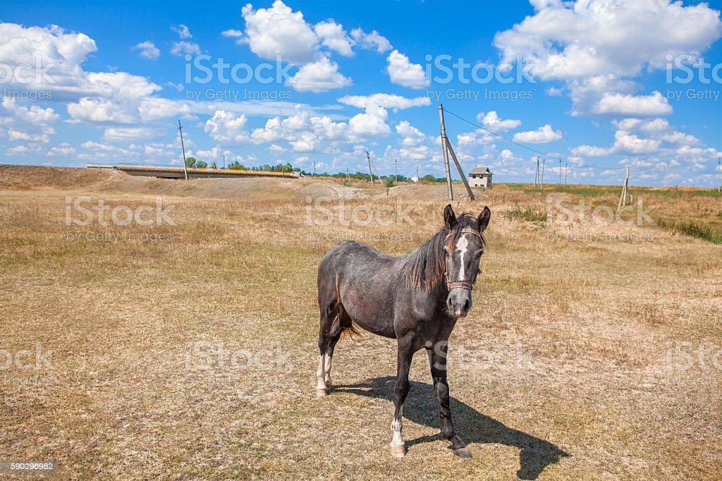 young curious horse royaltyfri bildbanksbilder