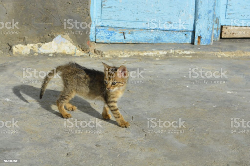 young cute cat royalty-free stock photo