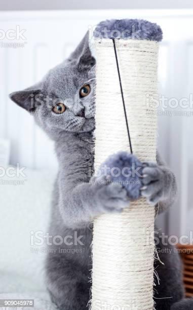 Young cute cat scratching his claws on a scratcher picture id909045978?b=1&k=6&m=909045978&s=612x612&h=t3zajvcbpjrmr3hjaelfhsk4eg9tfnat1rsfgtvz8bw=