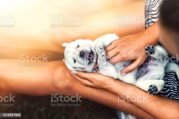 Young cute laughing little white labrador retriever dog puppy lies on picture id1015537832?b=1&k=6&m=1015537832&s=612x612&h=mlu7 v2iuqxohjcpm7hfvkdkea zdy9427w 1jzajhg=