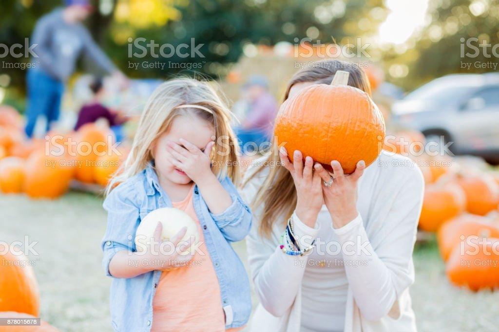 An adorable little preschool age girl holds a small white pumpkin and...