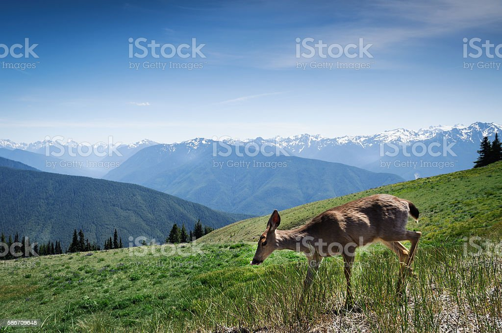 young deer in motion stock photo