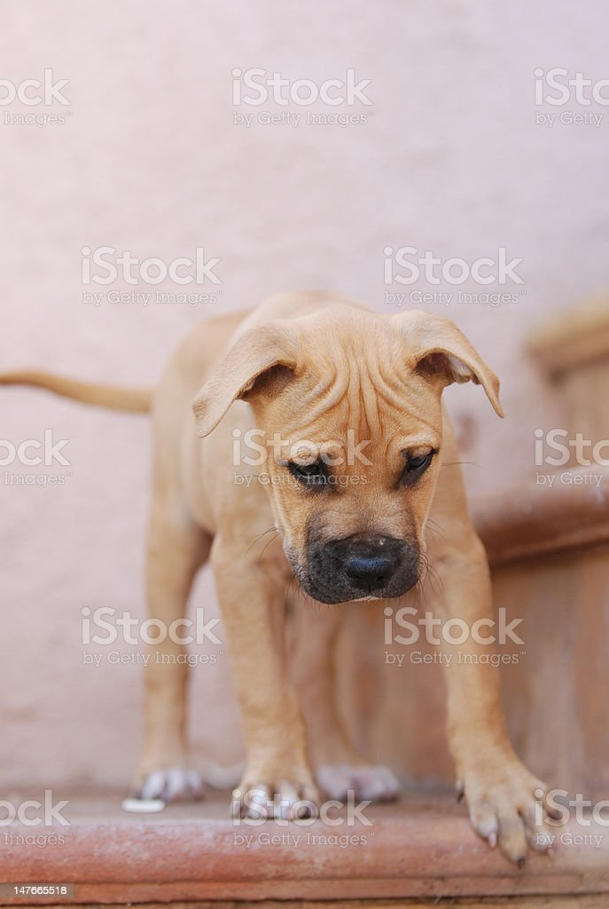 junger Hund auf Treppe stock photo