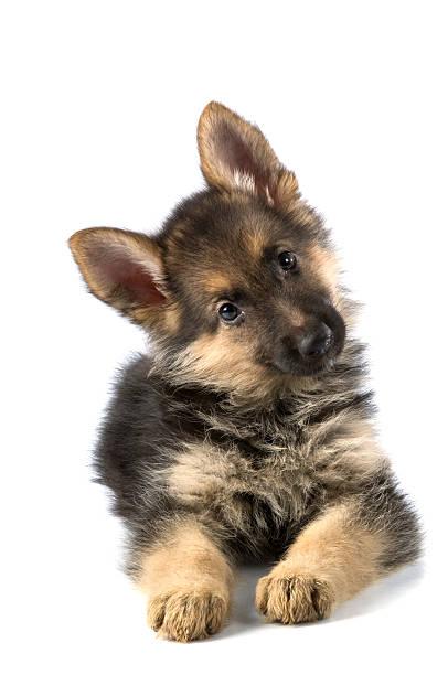 Jeune chien - Photo