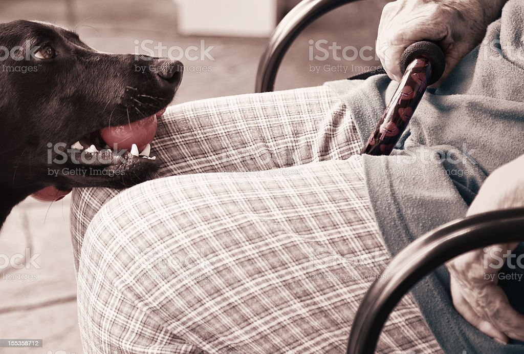 Young Dog With Toy - Old Woman Holding Cane royalty-free stock photo