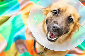 Happy young dog with veterinary collar also called elizabethan after surgery