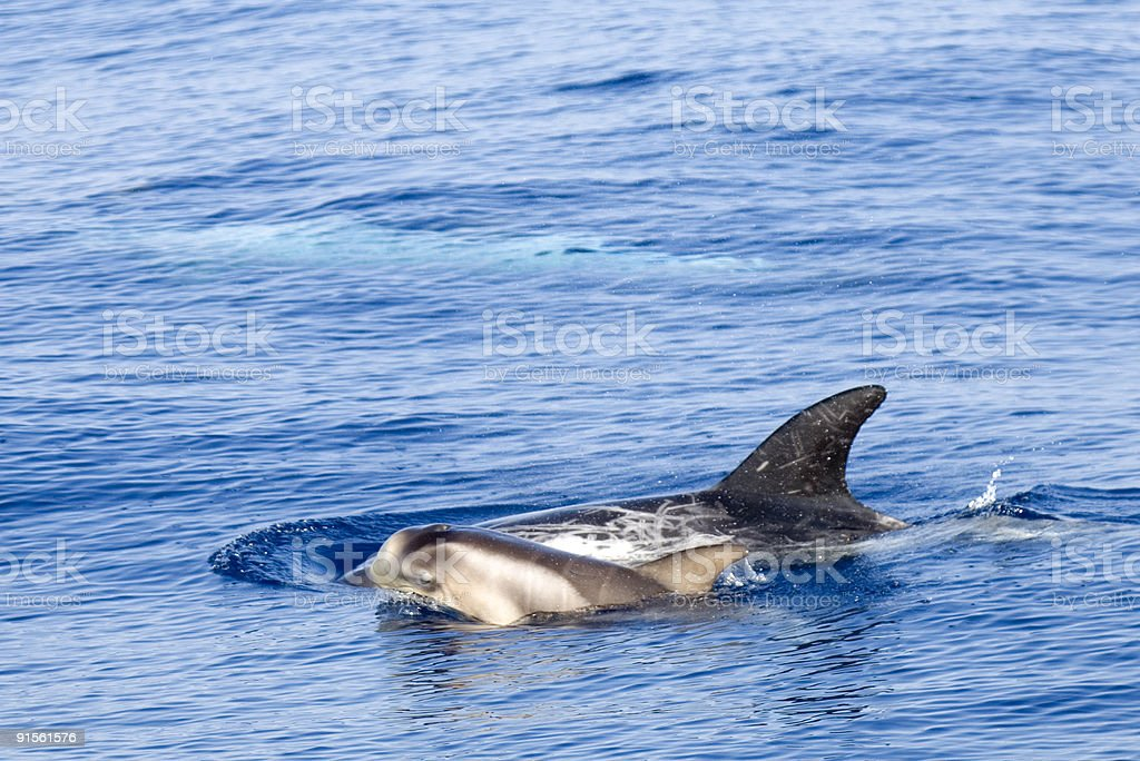 Young dolphin stock photo