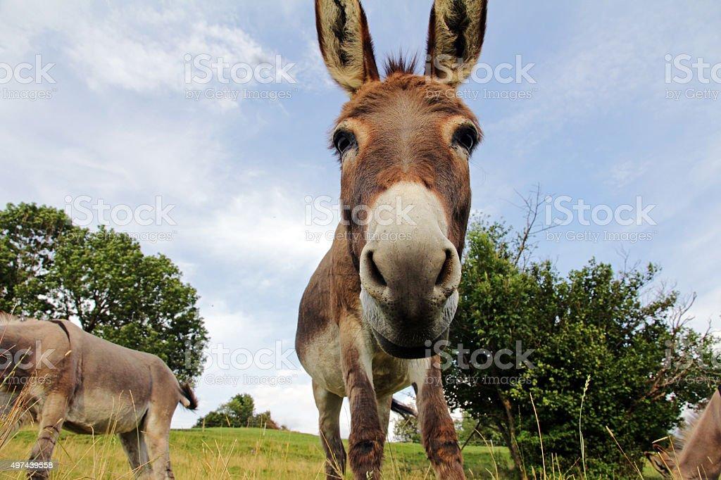 Young donkey stock photo