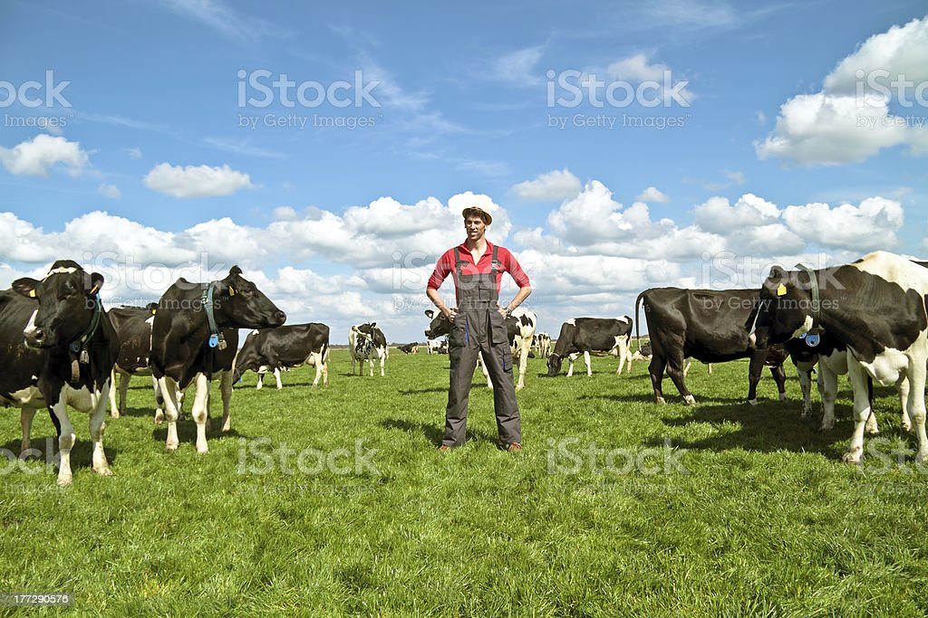 Young dutch farmer with his cows stock photo