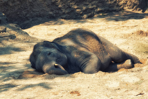 Image result for dead elephant