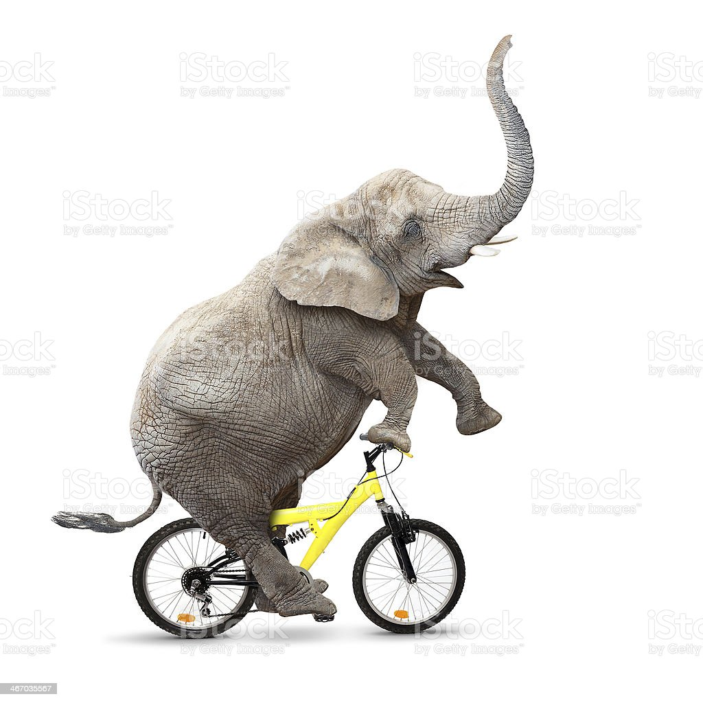 Young Elephant have a fun. stock photo