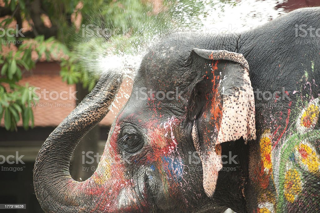 Young Elephant playing water. stock photo