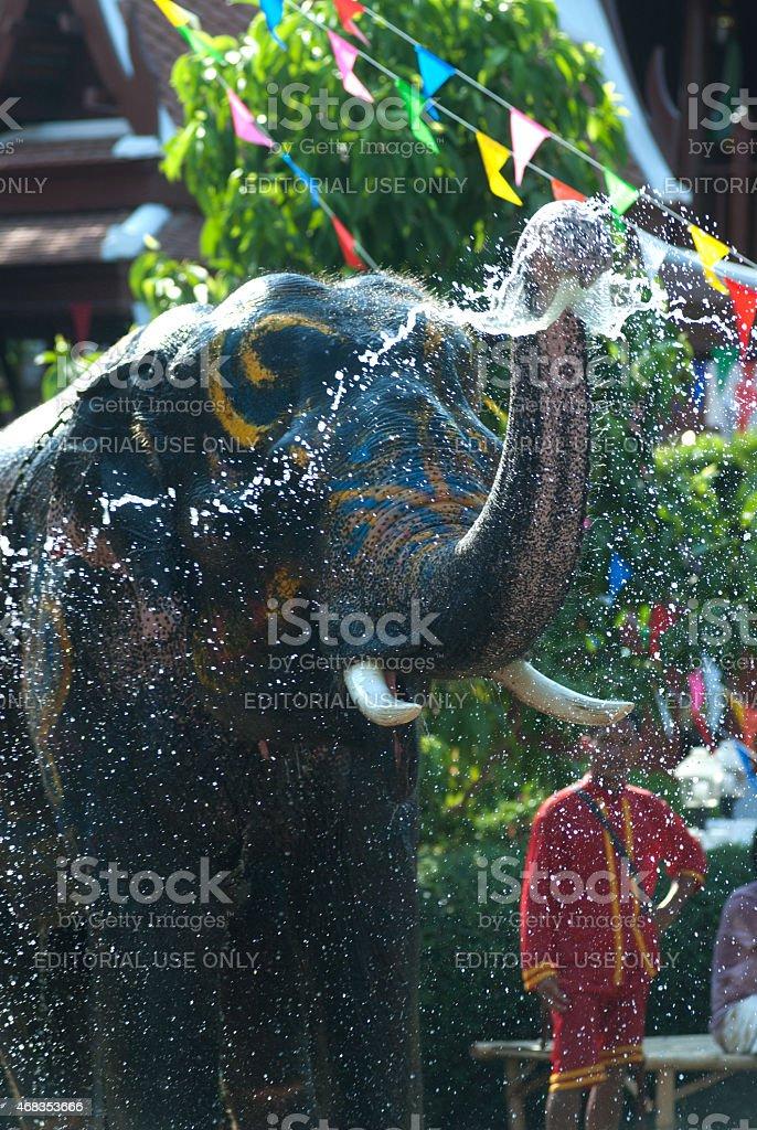 Young elephant splashing water. royalty-free stock photo