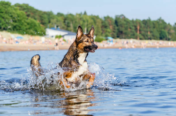 Young energetic halfbreed dog is jumping over water doggy is playing picture id1165935766?b=1&k=6&m=1165935766&s=612x612&w=0&h=qfyojguxxlprauhnozinla2y3sb0wwgxvnboscreqhg=